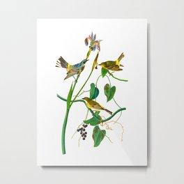 Yellow-crown Warbler Bird Metal Print