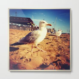 Seagul at Broadstairs Metal Print