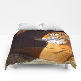 It's the Eye of the Tiger Comforters