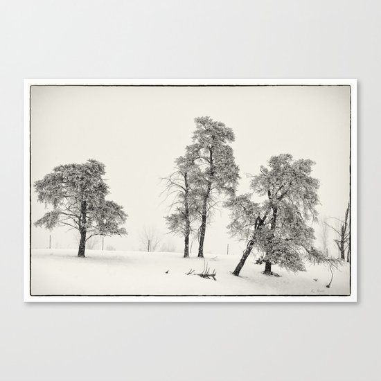 Winter Pines Canvas Print