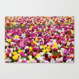 Collection of different tulips in Holland Canvas Print