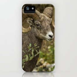 Ram Eating Fireweed cropped iPhone Case