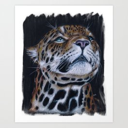 Jaguar Sniffing Colored Pencil Art Art Print