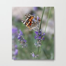Painted Lady Butterfly On Lavender Metal Print