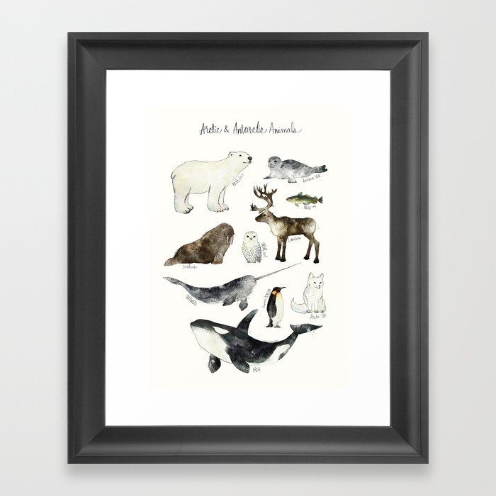 Arctic & Antarctic Animals Gerahmter Kunstdruck
