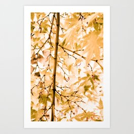 Japanese Maple Tree Leaves Art Print