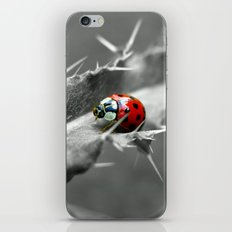 ladybug I iPhone & iPod Skin