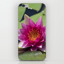 Longwood Gardens - Spring Series 305 iPhone Skin