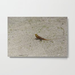 Tiny Dragon Metal Print