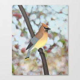cedar waxwing - bokeh Canvas Print