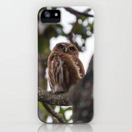 Birds from Pantanal Caburé iPhone Case
