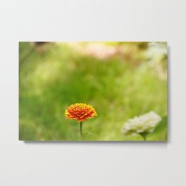 Yellow & Orange Mum Metal Print