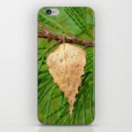 autumn leaf VI iPhone Skin