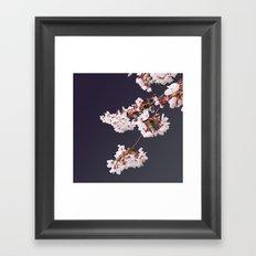 Cherry Blossoms (illustration) Framed Art Print
