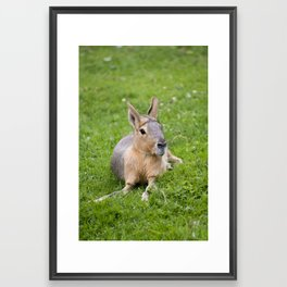 Mara #1 Framed Art Print
