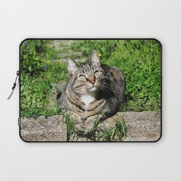 Thinking Cat in Sunlight Portrait Photography Laptop Sleeve