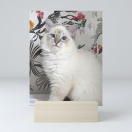 Saoirse the ragdoll princess Mini Art Print
