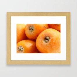 Loquats Framed Art Print