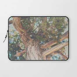 looking up through the leaves of the Juniper Tree ... Laptop Sleeve