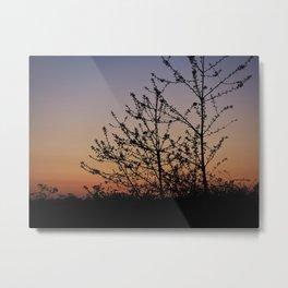 Evening glow Metal Print