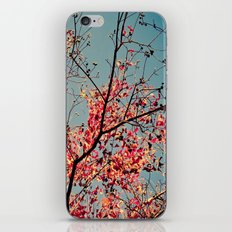 Autumn Branch & Leaves iPhone & iPod Skin