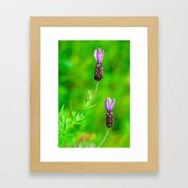 Lavender Two Flowers Framed Art Print