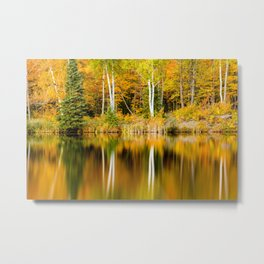 Autumn Reflections - Birch trees on Lake Plumbago Metal Print