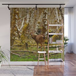 Deer In The HOH Rainforest Wall Mural