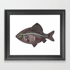 italian fish Framed Art Print