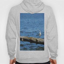 Seagull on Driftwood Hoody