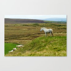 Irish Horse Canvas Print