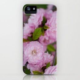 Flowering Almond 3 iPhone Case