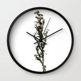 Chamomile Botanical Art Wall Clock