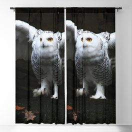 Snowy Owl With Open Wings Blackout Curtain