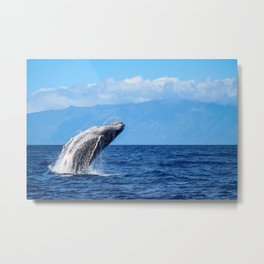 Humpback Breach 5 Metal Print