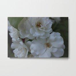 June Roses Metal Print
