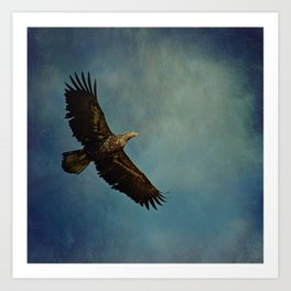 Young Bald Eagle Soaring in the Sky Art Print