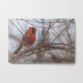 Rainy day cardinal Metal Print