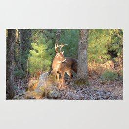 Deer Buck Cades Cove, TN Rug