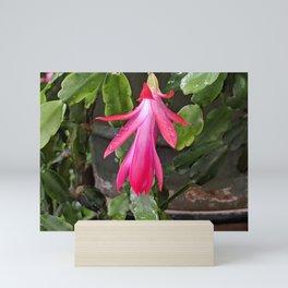 Pink Peels Mini Art Print