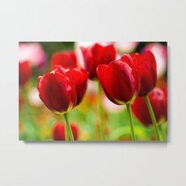 Bold Tulips Metal Print