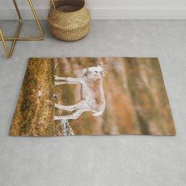 Reindeer Calf Rug