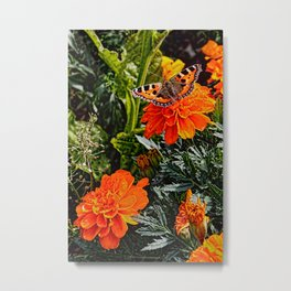 Tortoiseshell Butterfly on a Marigold Metal Print