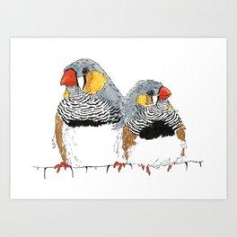 Zebra Finch Buddies Art Print