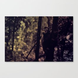 Old Monkey Canvas Print