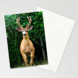 Still In Velvet Stationery Cards