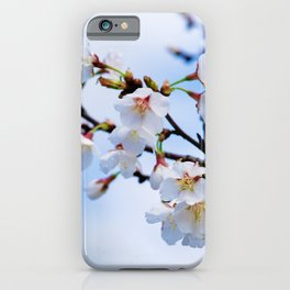 White Japanese Apricot Flowers, Blue Sky iPhone Case