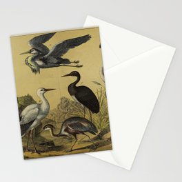 025 phoenicopterus roseus White Stork Black Stork mycteria marabu Grey or Mauritanian Heron Purple or Cape Verde Heron10 Stationery Cards