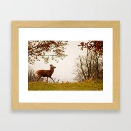 The Post Rut Strut Framed Art Print