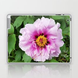 Rose and mauve peony with a heart of gold Laptop & iPad Skin